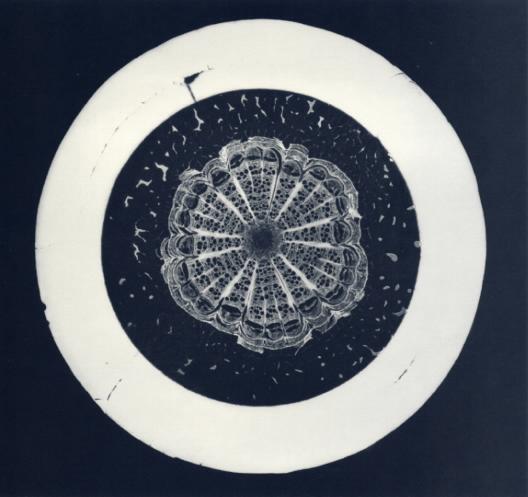 Botanical Specimen #1, 1992