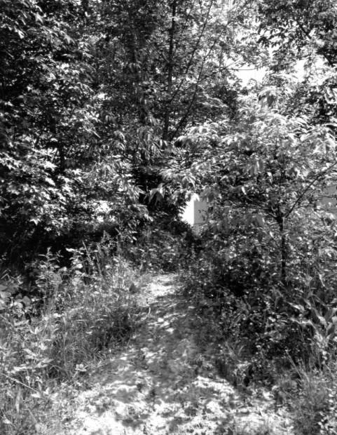 The Pond, c.1982