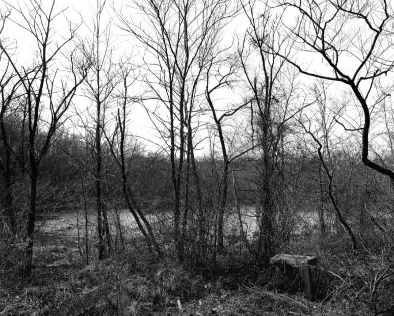 The Pond, 1982