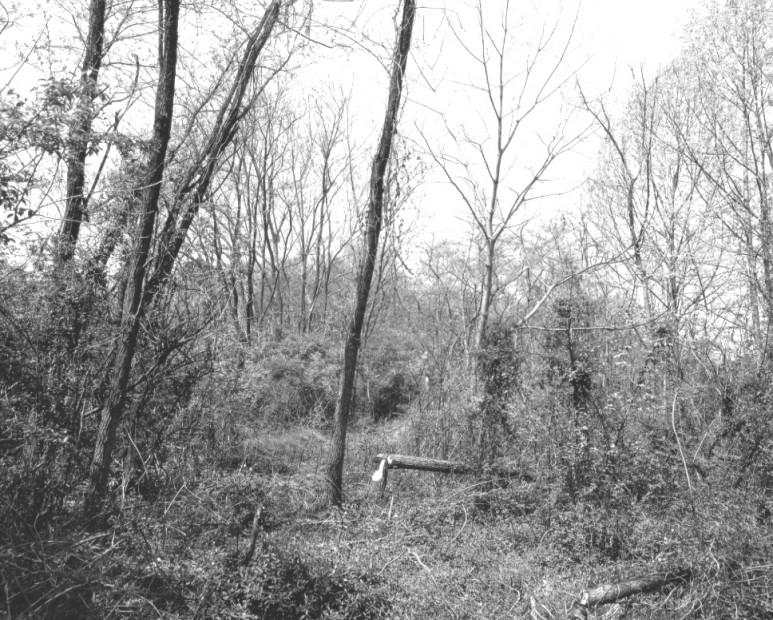 The Pond, 1983