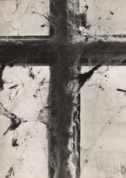 Wynn Bullock<br>Untitled, n.d.