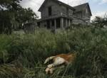 Eugene Richards  Howe, Nebraska, Dog in Grass, June, 2005