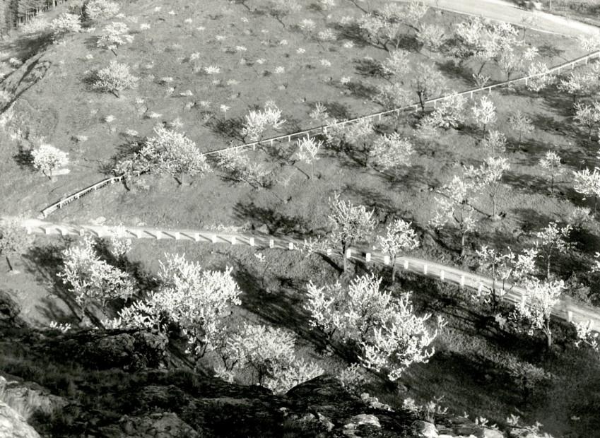Spring Landscape, c. 1940s