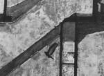 Thumbnail image: Landing Pigeon, New York, 1960