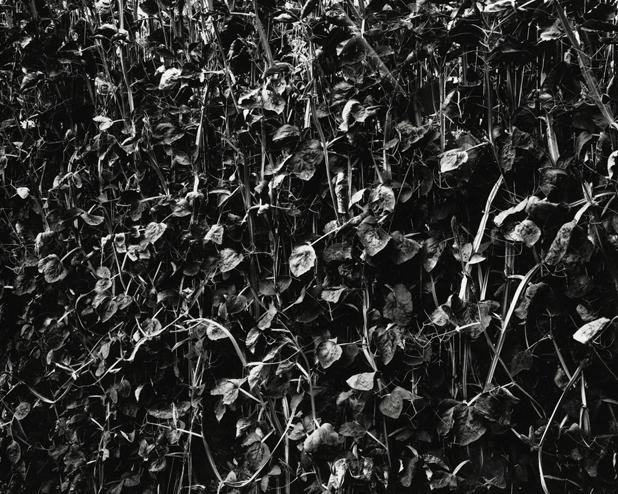 Leaves, n.d.