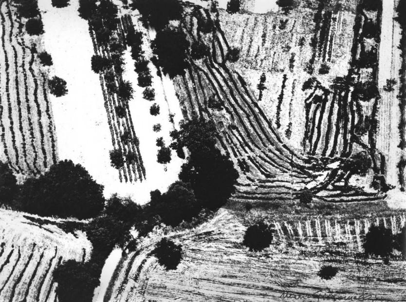 Landscape, #45, 1978