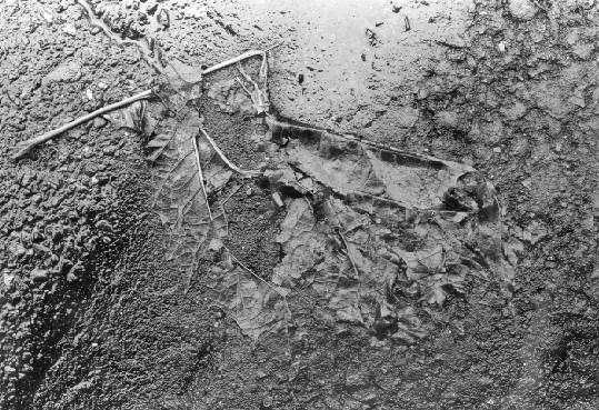 Yasuhiro Ishimoto<br>Leaf, 1985-91