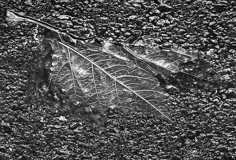 Yasuhiro Ishimoto<br>Leaves 2, Tokyo, c. 1988