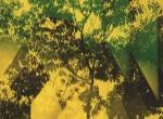 Thumbnail image: Yasuhiro Ishimoto<br>Untitled, c.1981