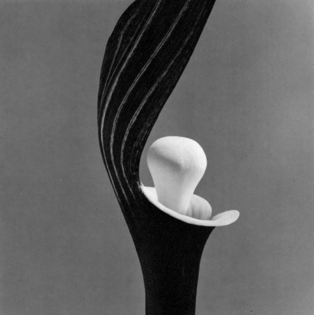Yasuhiro Ishimoto<br>Yukimochi-so, 1987