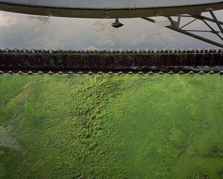 Algae, State of Water, 2016