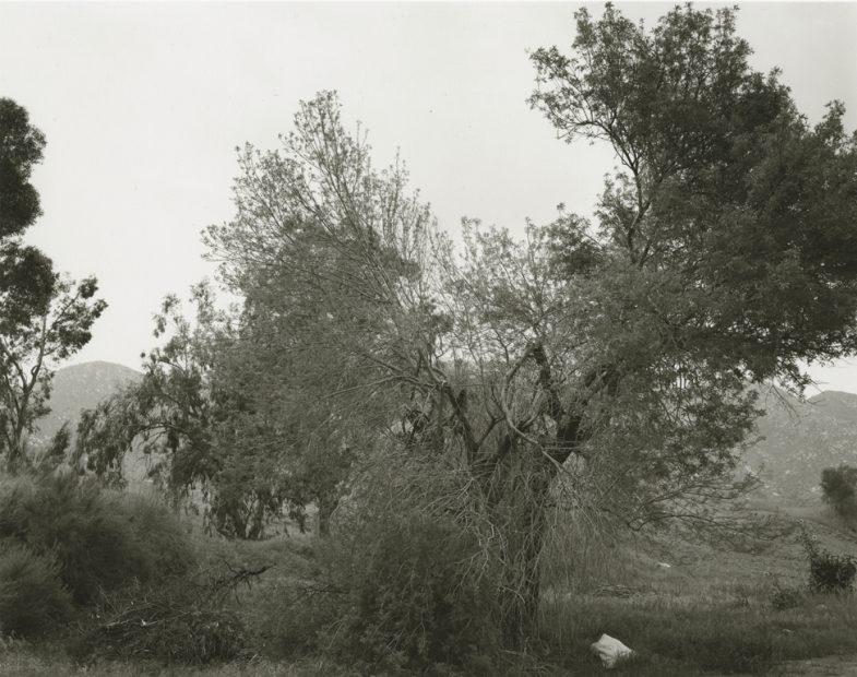 Robert Adams<br>Broken trees, next Box Springs Mountains, east of Riverside, California, 1983