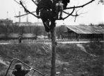Thumbnail image: Sabine Weiss<br>Paris, 1950