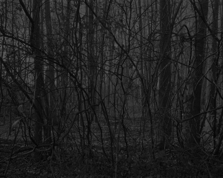 Untitled #17, (Forest), from Night Coming Tenderly, Black, 2017