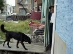 Thumbnail image: Paul D'Amato<br>Black Dog, Chicago, 1990
