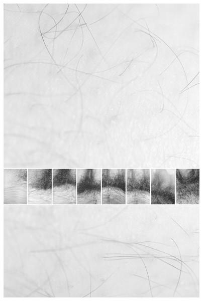 Self-Portrait: Hair, 1975/2012
