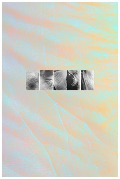 Self-Portrait: Skin, 1975/2012
